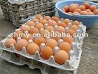 Egg Carton (30 cavities )