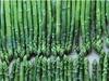fast frozen green asparagus