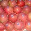 Shaanxi qinguan apple