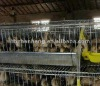 Quail Wire Cages For Sale (Factory)