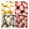 Chinese peanut kernels 2012 crop