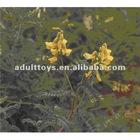 Chinese medicinal herbs astragalus powder