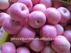 New crop Red Fuji apple from Yantai