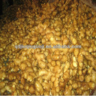 250g-300g fresh ginger
