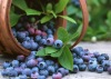 High-quality and Low-price Bilberry Extract/Fruit extract