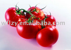 we have tomato paste at stock
