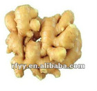 2012 Organic fat fresh ginger