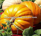 hot sell in Vietnam of pumpkins