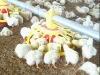 manufacturer directly supply chicken feeder pan