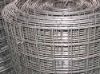 galvnaized welded wire mesh