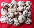 dried flower mushroom