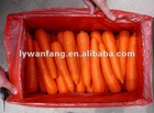 2012 base plant fresh red carrot price