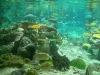 fish aquarium tank