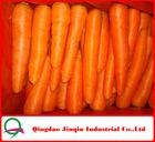 "JQ ""Shandong Fresh Carrot"" Fresh carrot /Fresh Baby Carrot/Chinese Carrot 2012 new crop"