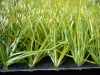 double color artificial lawn and grass