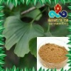 Ginkgo Biloba leaf Extract with Glycosides 24%