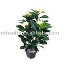 Plumeria Acutifolia artificial potted