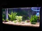 Square Clear Large Glass Aquarium