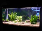 Square Clear Large Glass Aquarium