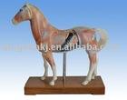 Horse acupuncture model