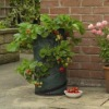 Strawberry Planter, strawberry grow bag