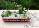 expanded perlite for gardening