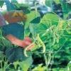 18x18cm, 8.5g Plant Climbing Net