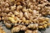 Chinese mature yello pure ginger