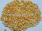 good quality gmo free maize origin Brazil