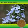 Rosemary herb plant extract 2012 new product