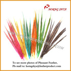 Colored Pheasant Feathers