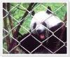 Electro-galvanized Animal Zoo Mesh Fencing