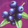 100% Natural&Professional Bilberry extract