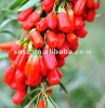 2012 organic goji berry