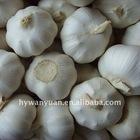 2011 Chinese fresh pure white garlic 6.0cm