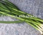 frozen dried green garlic