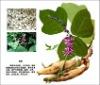 Organic Pueraria Extract