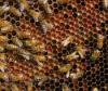 Bee products Beeswax Propolis Bee Pollen