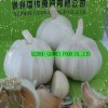 5.5cm normal white garlic 2012