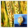 Natural Barley Malt Extract