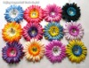 Promotion Chromatic daisy 12 color gerbera daisy flower +clip+12 piece headband /lot NEW ARRIVED NOW BABY FLOWER