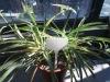 Plastic plant tag markers pot labels