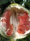 Organic red fruit pomelo