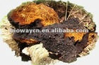 100% Natural Organic Chaga Extract Powder