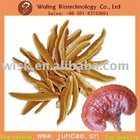 Hot new product for 2012 organic dried reishi mushroom