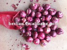 demand of onion exports in nashik high quality good taste