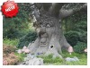 Hot sell talking tree