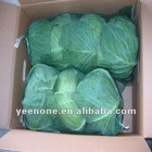 To Korea 3 pcs of 8kg mesh bag Big Round Cabbage