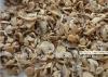 2012 canned mushroom