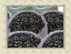 black watermelon seed
